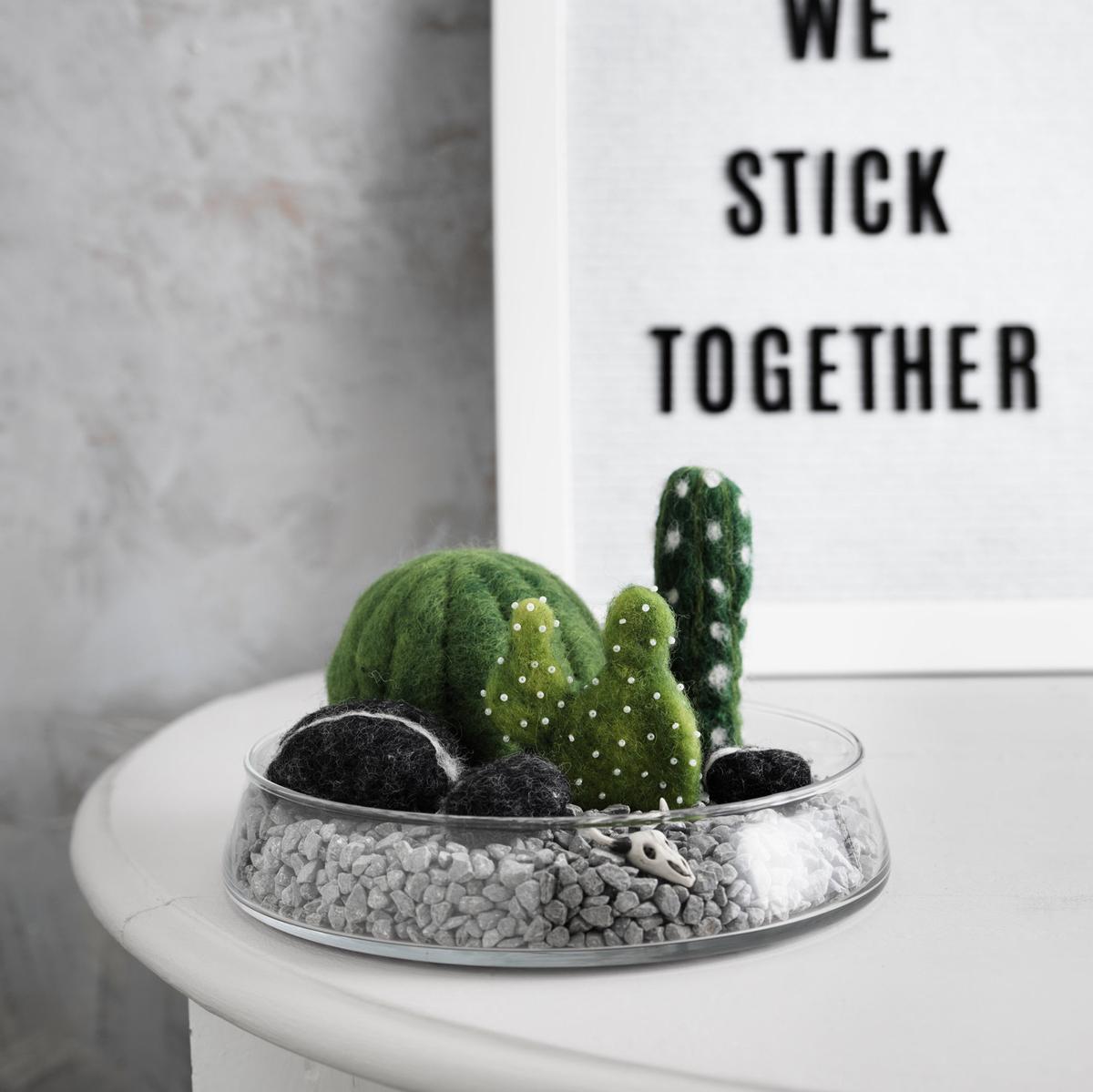 Nålfilta  kaktusar